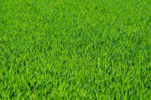 grass-275986_960_720